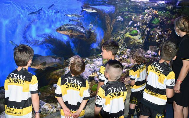Sortie de fin d'année à l'aquarium !